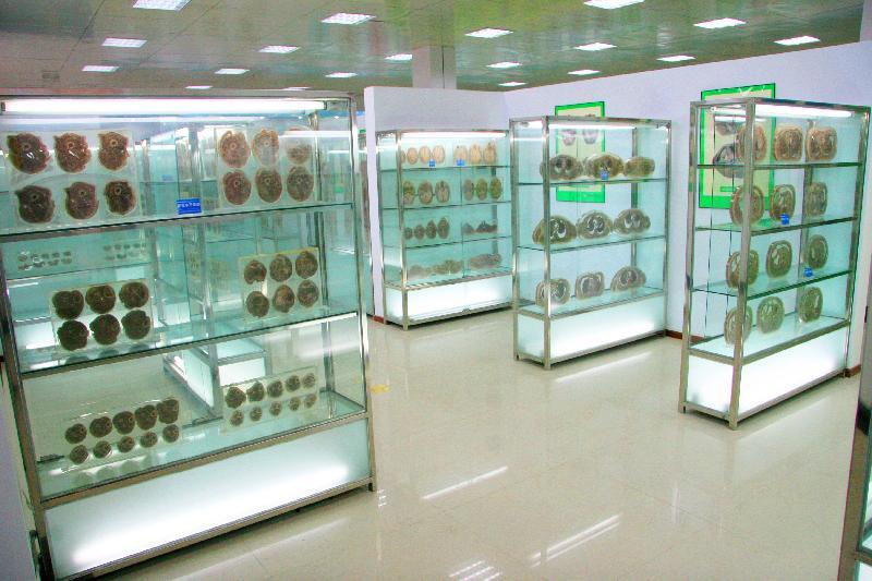 人体标本馆